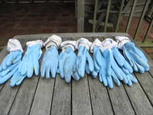 Guest's gloves