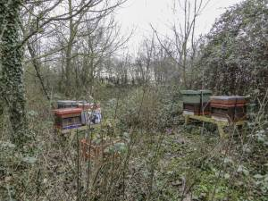 Apiary before the trim up